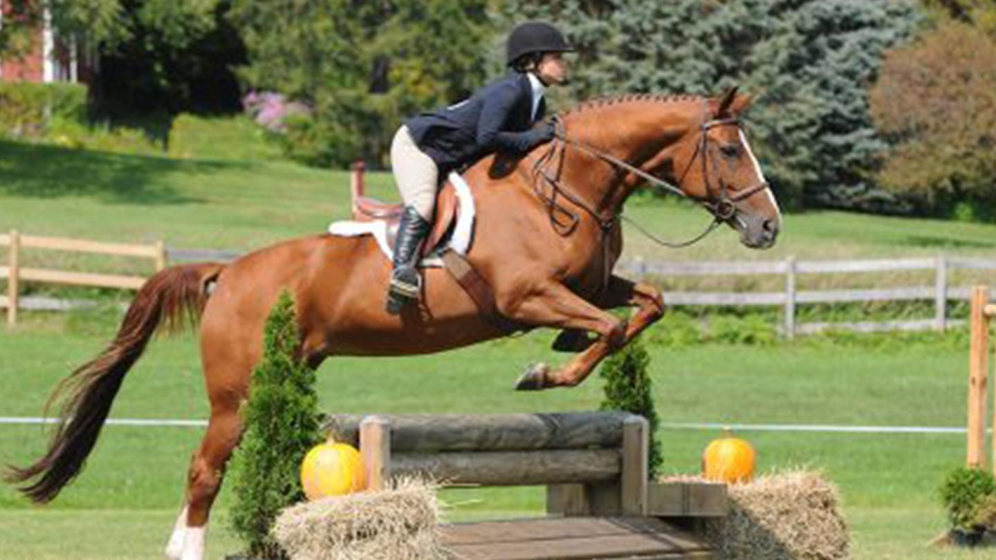 Fall Jumper Show at GMHA
