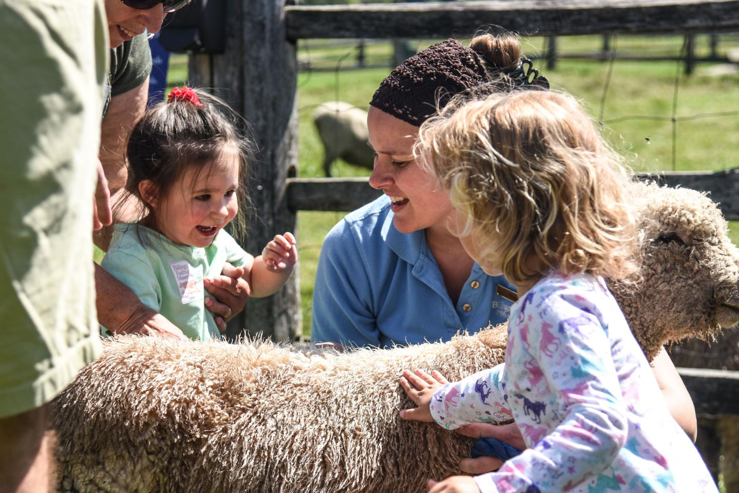 Visitors with the sheep at Billings Farm