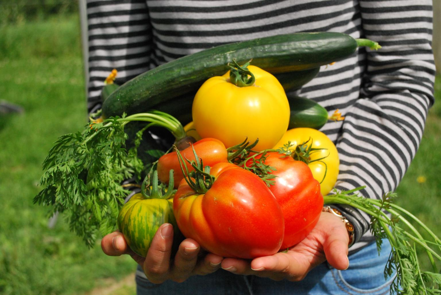 Armful of Garden Vegetables